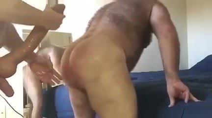 Big bear cocks