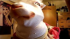 gagged mouth, furbondage, woolbondage,animal mask,furfetish,