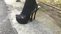 Lady L walking with black mules.'s Thumb