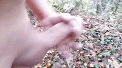 branle dans les bois