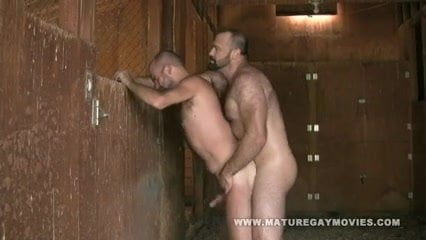 pictures bears Gay hairy