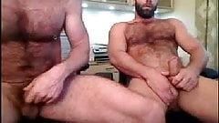 bear cam