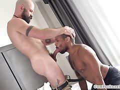 Bald bear doggystyle assfucking ebony stud