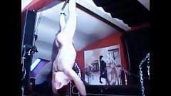 Sstooge hung like a stupid pig