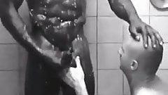 paja duchas