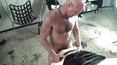 Pig Week Gorilla Bareback Porn