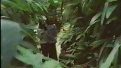 Versteckter Bambus