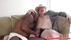 Grey wolf cock sucked by ebony bloke