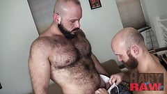 Bearded hunk Marco Bolt breeds pig Nixon Steele