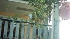 boso sa ybanez compound  cebu city 2