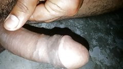 indian penis