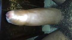 Uncircumcised Black Dick