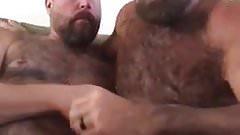 Sarro entre machos ursos
