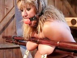 BM Mignotta - Ringed Bitch