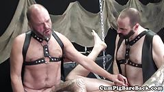 Bearded mature barebacked in bear threesome
