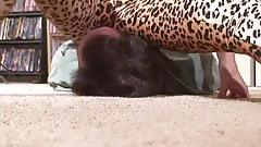 leopard spandex smothering