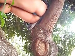 Ass tree