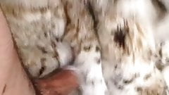 Lynx fur coat rub