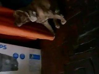 Download video bokep cachorro quer chupar buceta Mp4 terbaru