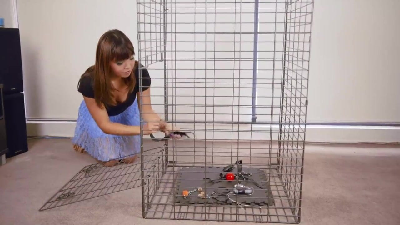 Bdsm control cage what? something