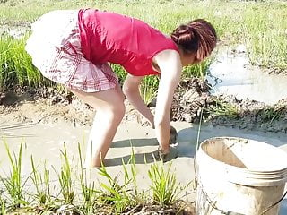 Download video bokep village lady in rice field upskirted Mp4 terbaru