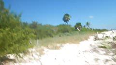 Great tits on Mexico beach. Hidden cam.
