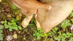 Branlette dans les bois