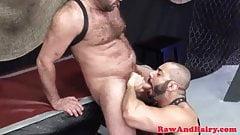 Bears having fun
