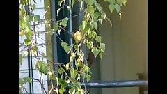 Neighbour Show hidden