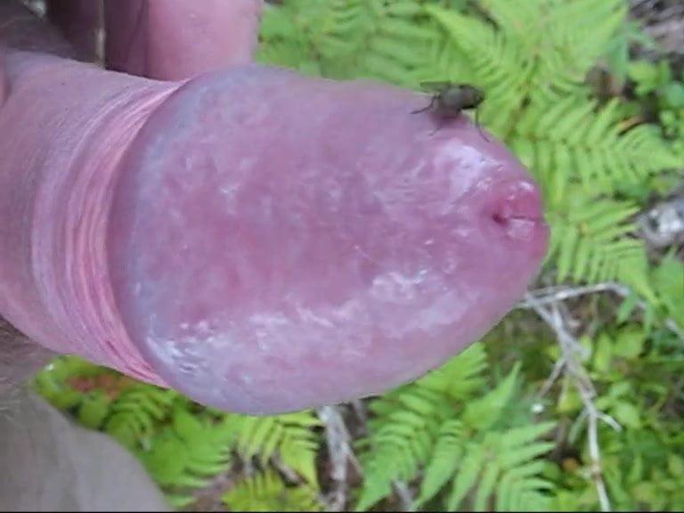 Mosquito biting cock fetish 9